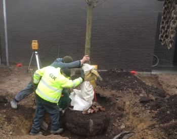 positioneren boom in plantgat